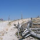 Dead Trees and Distant People by jdworldly