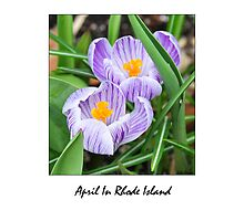 April In Rhode Island USA by Kate Adams