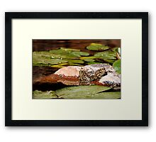 The sound of Silence... Framed Print