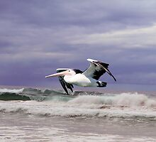 Pelican in Flight by Marie Solomons