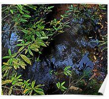 Bush Pool Reflections Poster