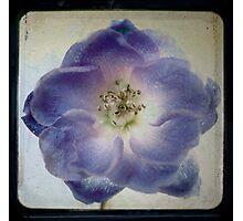 Flower 10 Photographic Print