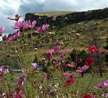 Cosmos and Sandstone I by Martie Venter