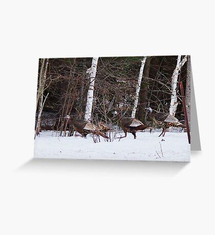 spring turkeys Greeting Card