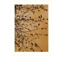 Bronze Blossom.. Art Print