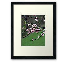 peach blooms Framed Print