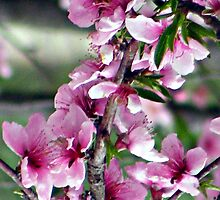 last peach blossom by rebecca smith