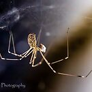 Universal Spider by Rick Playle