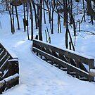 "Winter's Last ""Leg"" :) by TerriRiver"