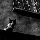 CAT ON A ROOF by Alvaro Sánchez