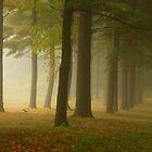 Misty Morn At Merrill Creek2 by Pat Abbott