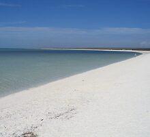 Shell Beach by Adam Jackson