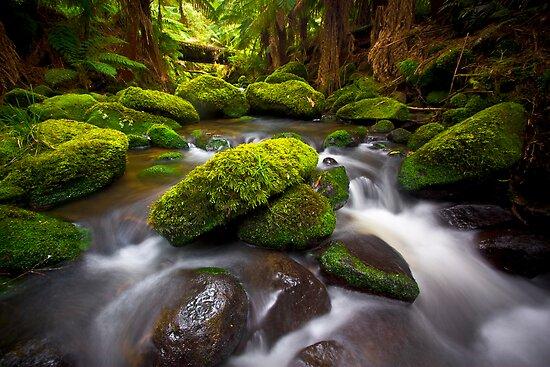 Otways Rainforest by Paul Pichugin