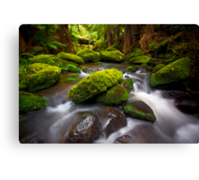 Otways Rainforest Canvas Print