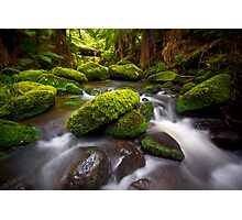 Otways Rainforest Photographic Print