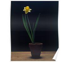 Zen Daffodill Poster