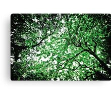 Celestial Roots Canvas Print