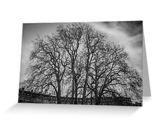 Trees in the Circus of Bath Greeting Card