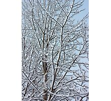 Snowy aspen branches  Photographic Print