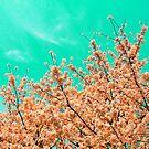 Aqua Sakura by Vittorio Zumpano