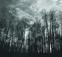 Reaching Heavenward by Nikki Trexel