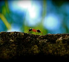Small Life ... Big World by AnnabelHC