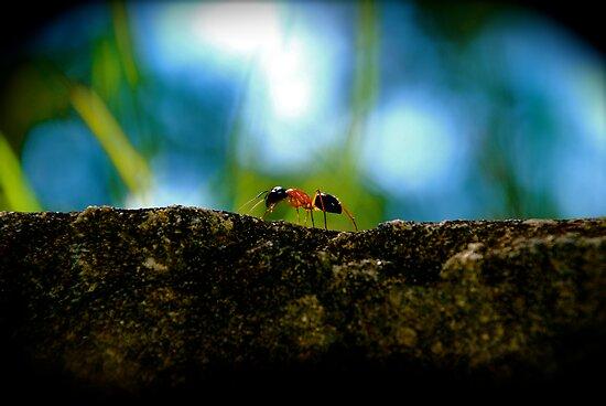 Small Life ... Big World by AnnabelHC