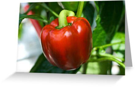 Juicy Red by Amy Dokken