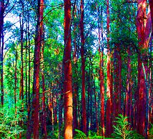 Psychedelic RainForest Series #1 - Yarra Ranges National Park , Marysville Victoria Australia by Philip Johnson