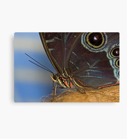 Owl Butterfly Macro Canvas Print
