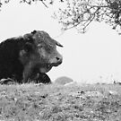 ferdinand the bull by Mik Efford