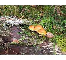 forest fungi 1 Photographic Print