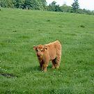 cute calf by flower7027