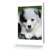 Pembroke Welsh Corgi puppy Greeting Card