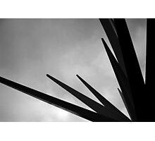 ESTRELLA Photographic Print