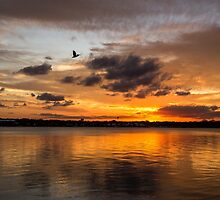 Pelican Afterglow by JLOPhotography