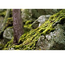 Flowing Moss Photographic Print
