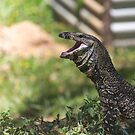 lace monitor by col hellmuth