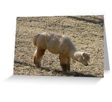 Furry Alpaca Greeting Card