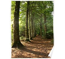 Wooded Walk Poster