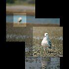 Gulls by focusonyouphoto