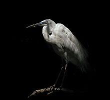 Shades of Captivity by Peter Kurdulija