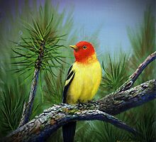 Western Tanager by Rich Summers