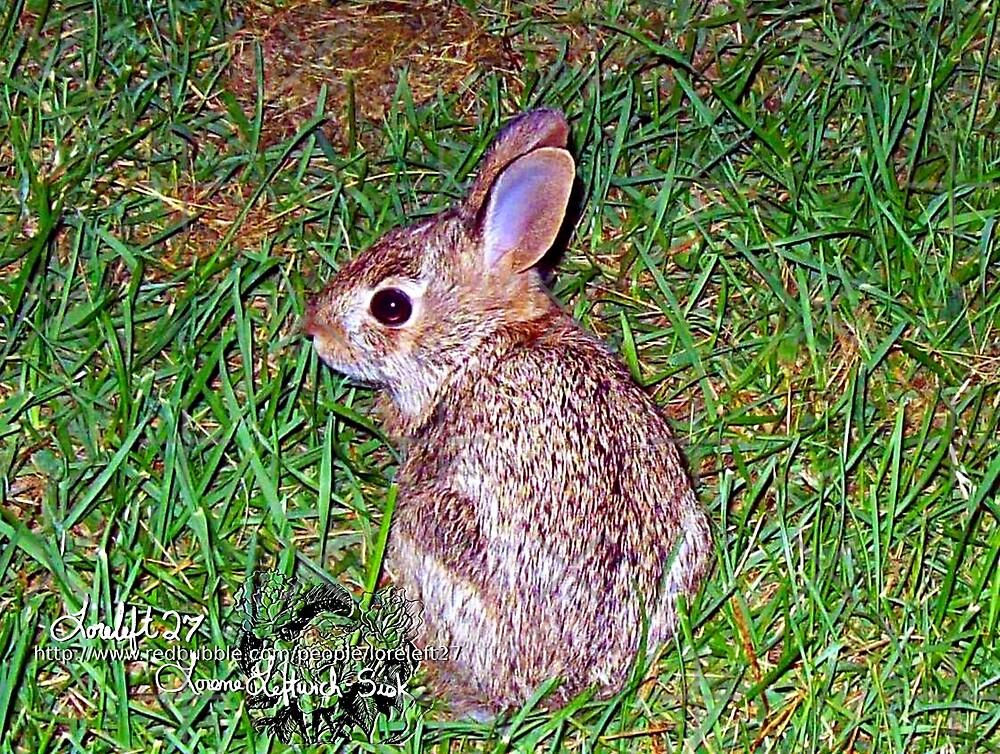 little baby bunny 2  by LoreLeft27