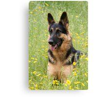 Alsatian German Shepherd outdoors in field grass Canvas Print