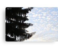 Fir tree against Sky Canvas Print