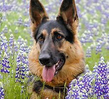Alsatian German Shepherd in flowers by Lisa Anne McKee