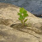 A tree growing in the crack by lovesmoondrop