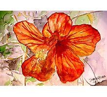 Hibiscus tropical flower 2 Photographic Print