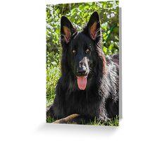 Alsatian German Shepherd black long haired Greeting Card